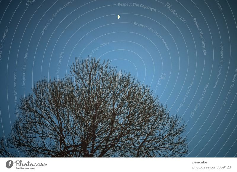 ade zur guten nacht blau Baum schwarz warten Ordnung Urelemente schlafen Pause Mond Diät Geäst Ablehnung Zyklus abnehmend
