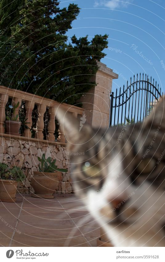 Unscharfe Mieze latscht durchs Bild Katze neugierig freundlich Mauer Tor schmiedeeisen Terracotta Tops Kakteen Balustrade Geländer Bildfehler unscharf