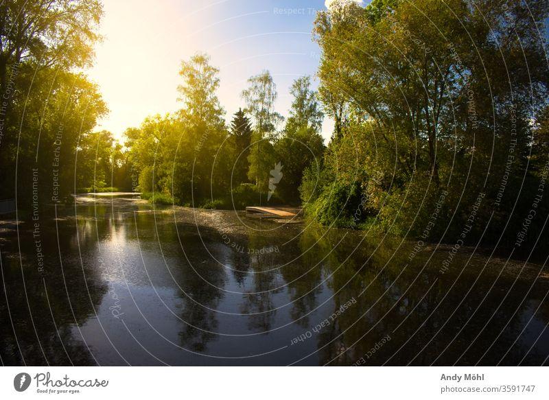 Sonnenuntergang am Sonntag Sonnenuntergang am Abend Sonnenlicht Fluss Wasser Landschaft Bootsteg bootstour Dämmerung Spiegelreflexkamera Wald Sachsen-Anhalt