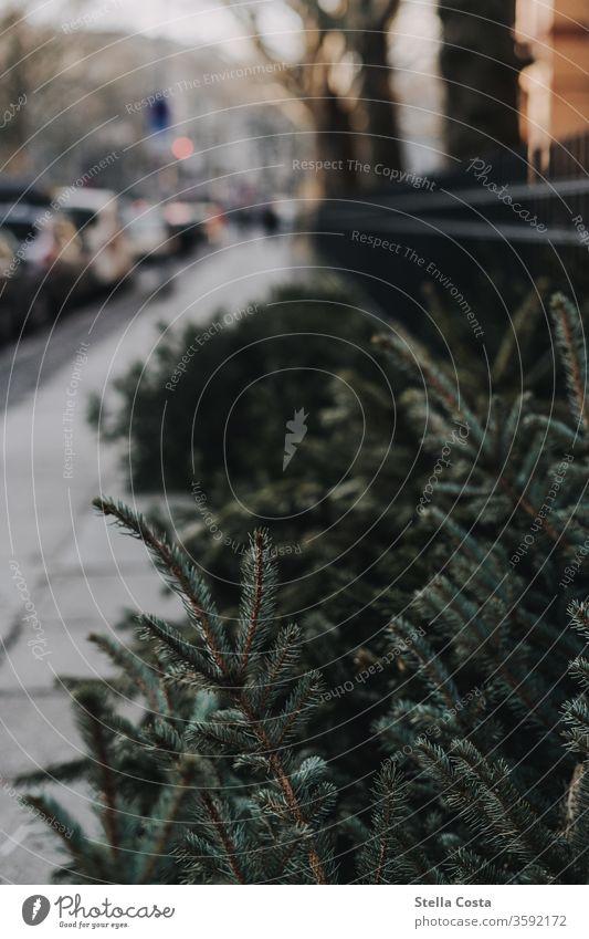 Detailbild von alten Tannenbäumen die am Bürgerstreigrand liegen Im Freien Fotos Städtische Straße Fotos Streetart Fotos Hauptstraße Fotos Gehweg Fotos