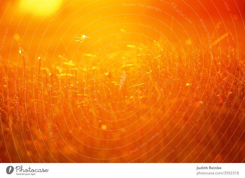 Im Gegenlicht erfasst fliegender Blumensamen Sonnenuntergangsstimmung Wiese Samenflug Blumensamenflug Wiesenland mystisch mystic orange bokeh lichter