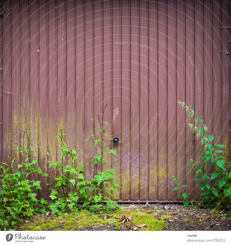 Ausfahrt freihalten! Häusliches Leben Gartenarbeit Pflanze Moos Grünpflanze Unkraut Unkrautbekämpfung Brennnessel Grünspan Tor Gebäude Architektur Garage