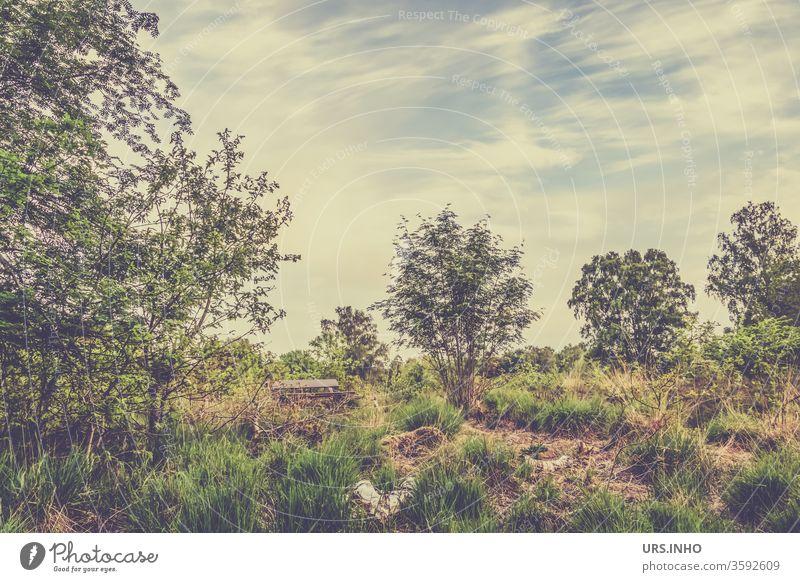 die Parkbank in der Moorlandschaft lädt zum Ausruhen ein Parkank Natur Sumpf Wittmoor Außenaufnahme Landschaft menschenleer Bäume wanderausflug Ausflug Tag