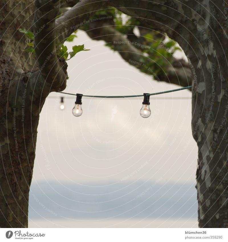 ... die Lichter sind schon an Glühbirne Beleuchtung Lampe Pflanze Baum Platane Park Garten hängen leuchten stehen schön Biergarten Bodensee Aussicht