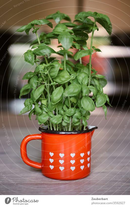 Basilikum in einer roten Tasse mit weißen Herzen grün Pflanze Gewürz Küche kochen Italienische Küche Kräuter & Gewürze Lebensmittel kochen & garen gemütlich