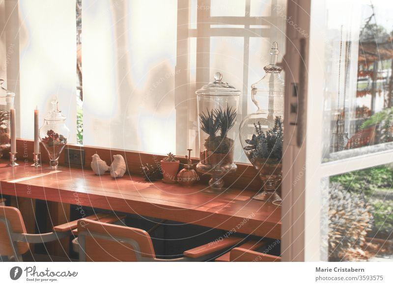 Zimmerpflanzen, die die Fensterbank schmücken, um einen entspannenden Raum zu schaffen, der die Quarantäne und Selbstisolierung des Hauses während des Ausbruchs des Covid-19 erleichtert