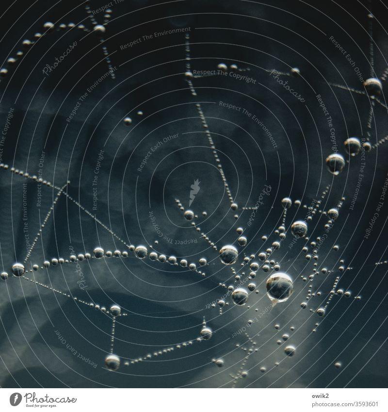 Es hängt fest Detailaufnahme Außenaufnahme Gedeckte Farben Farbfoto filigran authentisch dünn Schweben Leichtigkeit Spinngewebe Spinnennetz Idylle ruhig viele