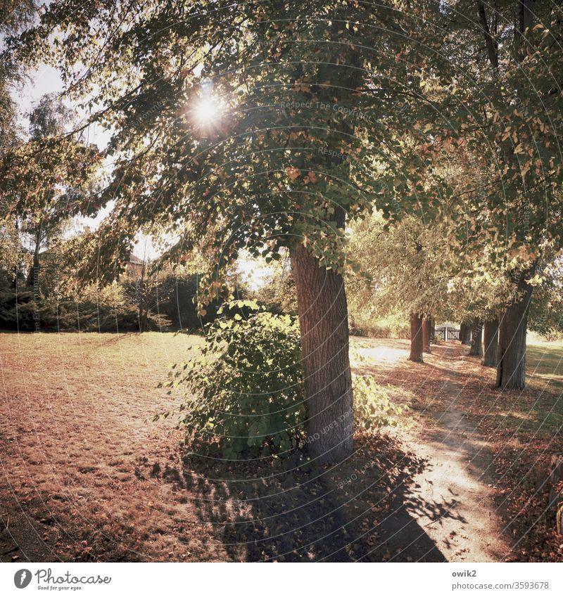 Draußen Idylle Wege & Pfade Waldboden Sträucher Bäume leuchtend strahlend Sonnenlicht lichtdurchflutet Gegenlicht Lichtung Herbst Menschenleer Natur Wiese