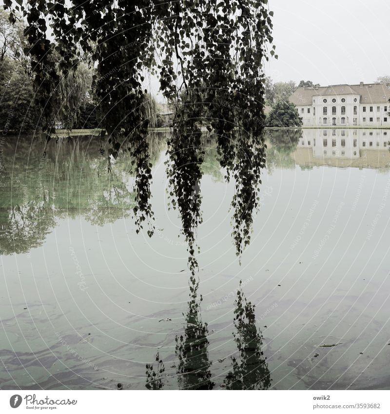 Die Hängenden Gärten von Königswartha Sachsen Lausitz Ostdeutschland Außenaufnahme draußen Horizont Landschaft Umwelt Idylle Baum Schönes Wetter