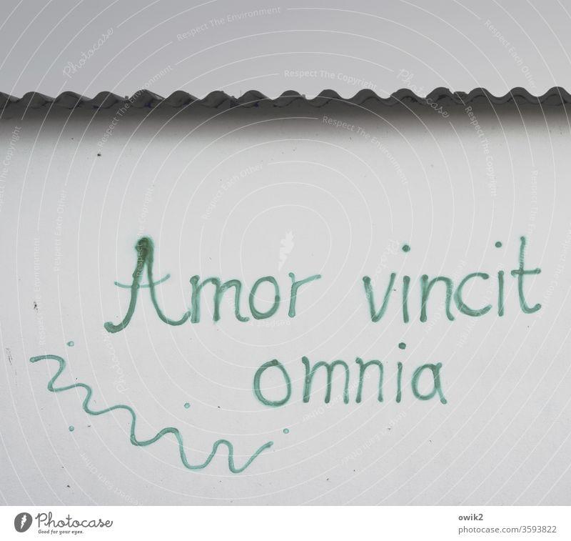 Liebhaberlatein Wandmalerei Fassade Buchstaben Latein Sinnspruch Schriftzeichen Mauer Außenaufnahme Graffiti Menschenleer Farbfoto Wort grau Gebäude Zeichen