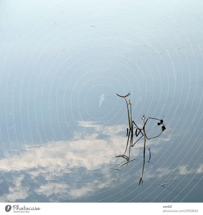 Viel Platz Wasser Pflanze Himmel Reflexion & Spiegelung Wasserpflanze Halme einsam minimalistisch Wolken Textfreiraum oben Textfreiraum links Textfreiraum Mitte