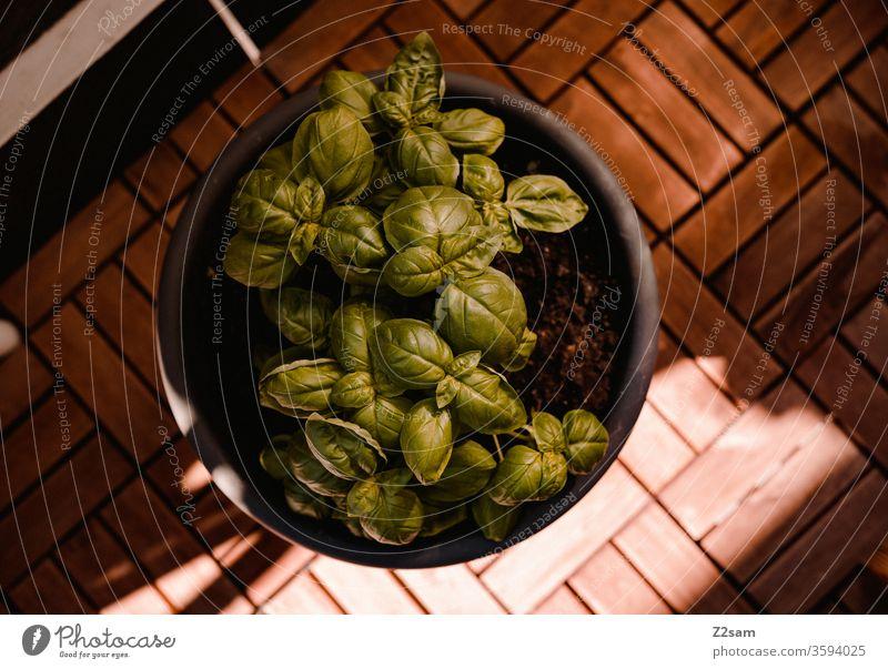 Basilikum auf dem Balkon balkon topfpflanze kräuter gesund kochen italien mediterran sommer sonne wärme natürlich ernährung gesundheit nahrungsmittel holzboden