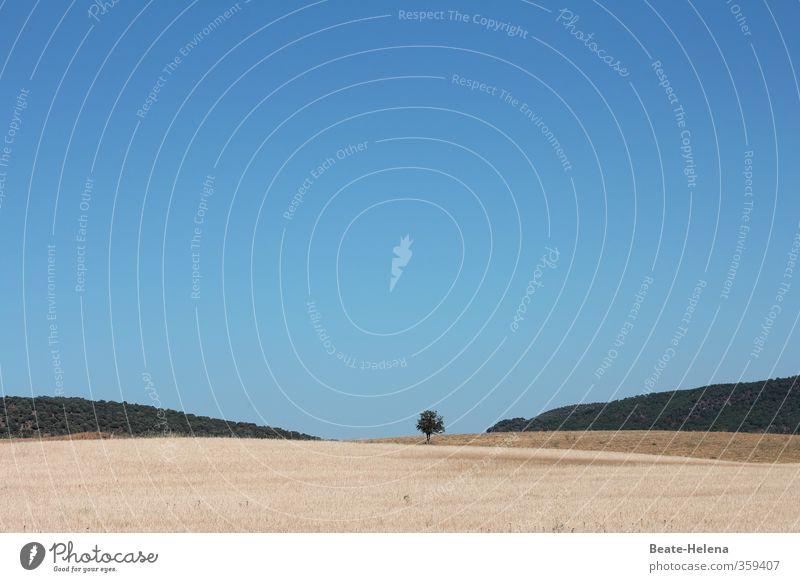piekst | Barfuß im Stoppelfeld Natur Ferien & Urlaub & Reisen blau grün Sommer Sonne Baum Erholung Landschaft Ferne Horizont braun Stimmung Feld stehen