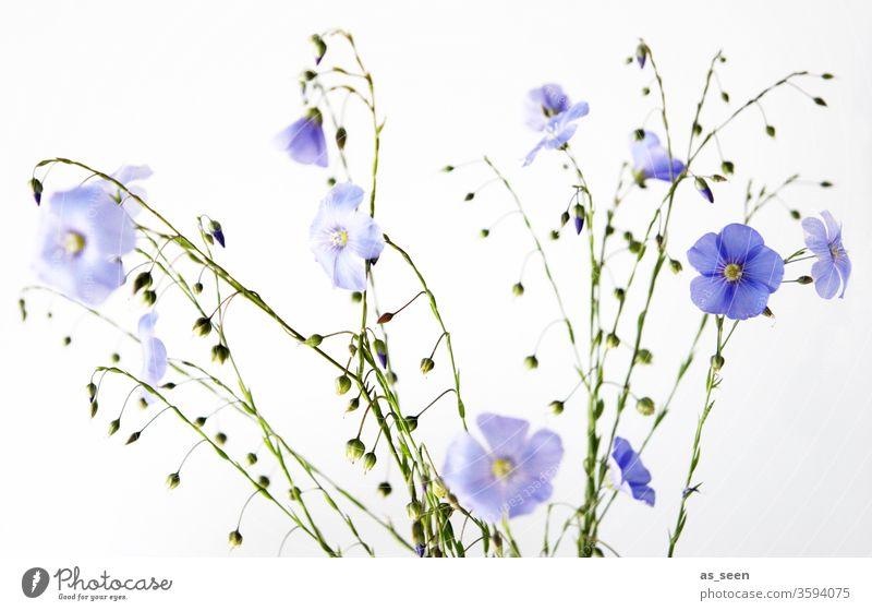 Lila Blüten Blumenstrauß Natur Sommer Pflanze schön geblümt Garten Farbe grün natürlich hell frisch Blütenblatt weiß Blütezeit Feldblumen Schönheit lila