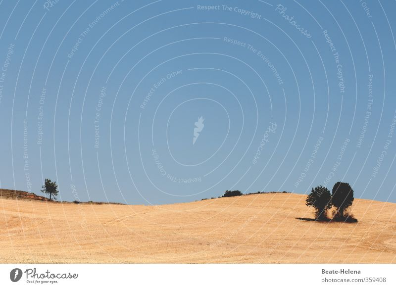 Trockenheit | auf dem spanischen Festland Natur Ferien & Urlaub & Reisen blau grün Sommer Sonne Baum Landschaft Ferne gelb Wärme Paar Zusammensein Feld trist