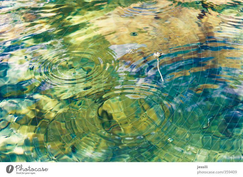 Schnittmengen Pflanze blau grün Wasser Umwelt Frühling Gefühle Schwimmen & Baden Regen orange träumen Wassertropfen beobachten berühren Netzwerk Schwimmbad