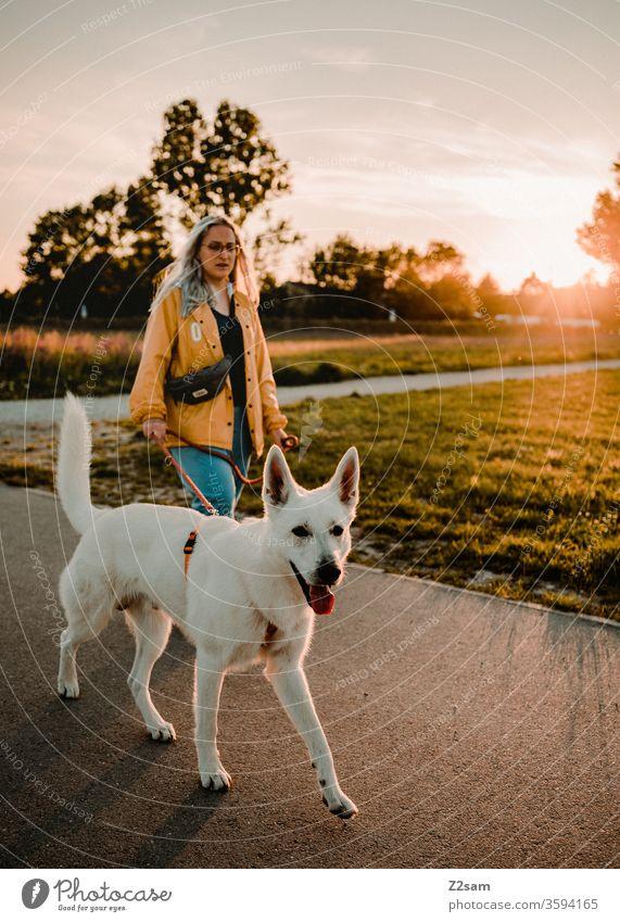 Gassi gehen in der Abendsonne gassi gehen hund Spaziergang Haustier Außenaufnahme Landschaft Sonnenuntergang sommer wärme natur Schäferhund weiß frau Säugetier