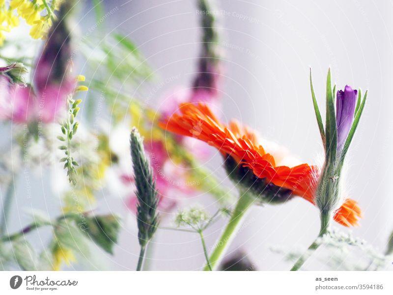 Bunter Blumenstrauß margeriten bunt Natur Blüte Sommer Pflanze schön geblümt Garten Farbe grün natürlich hell frisch gelb Blütenblatt weiß orange Lupine