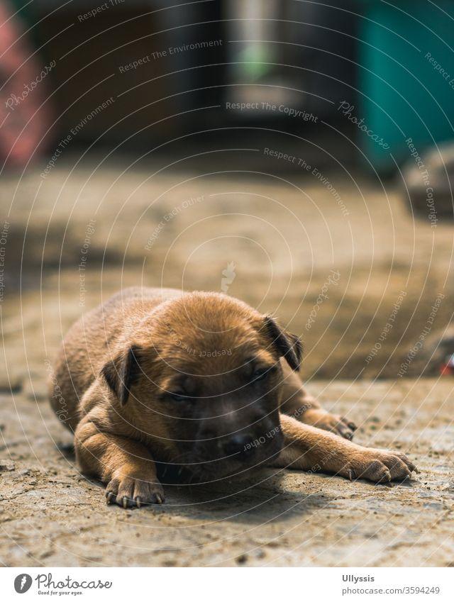 Nahaufnahme eines neugeborenen Welpen, der bei Sonnenuntergang vor dem Haus auf dem Boden liegt bezaubernd Tier Hintergrund Bär schön schwarz züchten braun