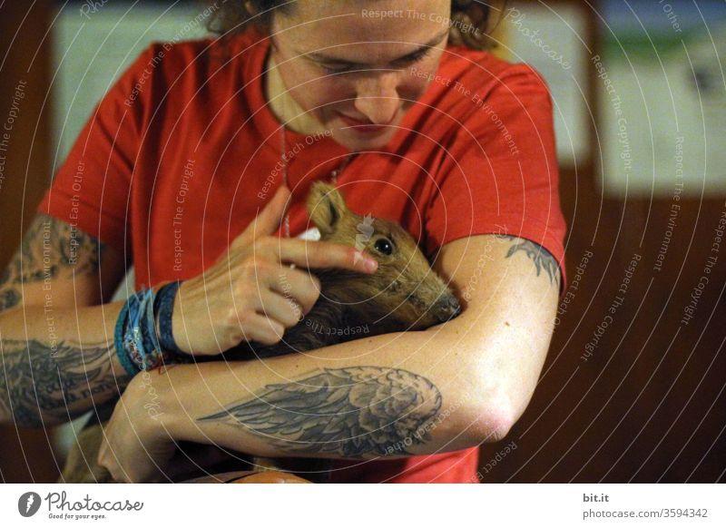 Junge, tierliebe, tätowierte, neugierige Frau streichelt junges Wildschwein. Frischling mit braunem Fell drinnen auf dem Arm einer Frau in rotem T-Shirt. Vorderansicht, Oberkörper einer natürlichen Erwachsenen mit Flügel Tatoo, vielen Tätowierungen am Arm.