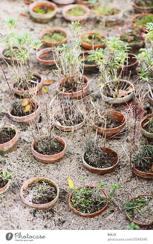symmetrie I in den Sand gesetzt ... sandboden trocken Trockenheit vertrocknet Dürre Natur Erde Umwelt Pflanze Wärme Klimawandel Sommer heiß braun dehydrieren