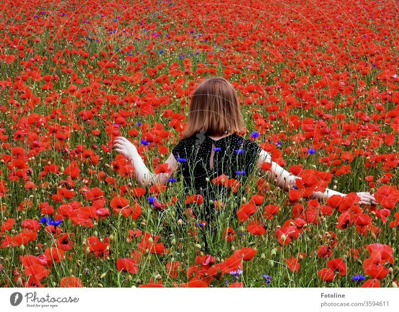 Ein junge Teenagerin streift durch eine Mohnblumenwiese. Dabei ist sie ganz vorsichtig, um keine Blume zu knicken. Mohnblüte Pflanze rot Blüte Außenaufnahme
