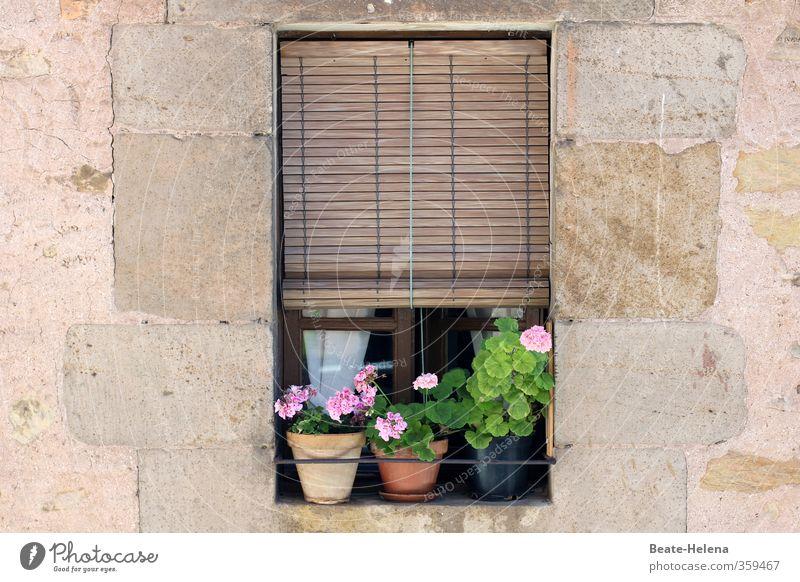 Es war Sommer Ferien & Urlaub & Reisen schön Erholung Blume Haus Wand Mauer Blüte Autofenster braun rosa Wohnung Häusliches Leben Tourismus Blühend