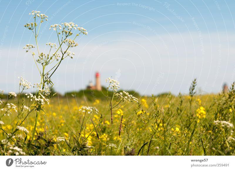 Leuchtturmblick blau Sommer Pflanze Sonne Landschaft Umwelt Ferne Wiese Gras Horizont Feld Tourismus Schönes Wetter Raps Wildpflanze