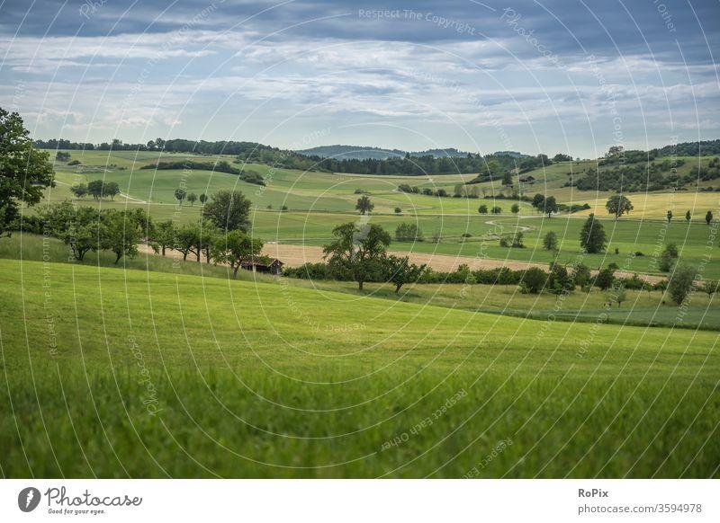 Neulich beim Spaziergang in der Heimat.. Meadow wiese gras Mauer baum tree Landschaft Natur Wetter Sommer summer Wolken Himmel sky Gebirge britain Schottland