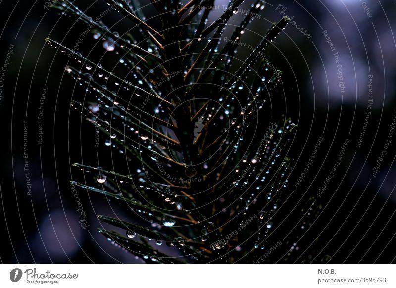 Bunte Regentropfen hängen an einem Tannenzweig Nadelbaum Außenaufnahme Natur Tropfen Wasser nass Wassertropfen Wetter Farbfoto Pflanze Detailaufnahme