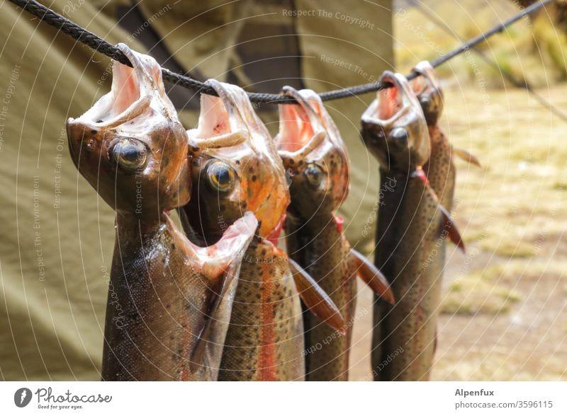 Sonntags einfach mal abhängen Forellen Regenbogenforelle Camping Tod Ernährung Küche Fisch Farbfoto Lebensmittel Gesunde Ernährung Diät Kräuter & Gewürze