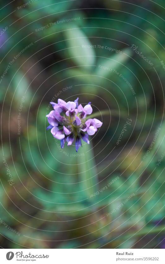 Die kleine Blume, die sich auf dem grünen Mantel ablegt. Pflanze Feiertag Blumenhändler Frühling Nahaufnahme riechen Makro natürlich Garten olfaktorisch frisch