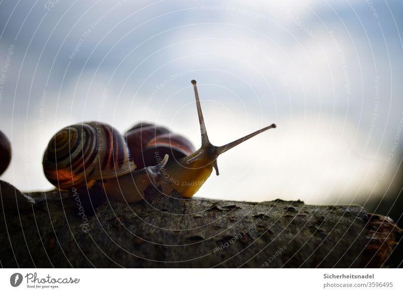 Silhouette Schnecke Schneckenhaus Sonnenuntergang Gartenschnecke Außenaufnahme Nahaufnahme Natur Makroaufnahme Menschenleer Detailaufnahme Stilaugen neugierig