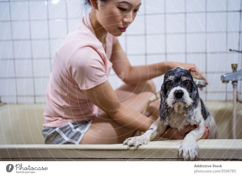 Frau wäscht reinrassigen Welpen im Badezimmer Hund Besitzer Waschen Haustier Badewanne asiatisch niedlich ethnisch heimwärts heimisch Tier Pflege Eckzahn