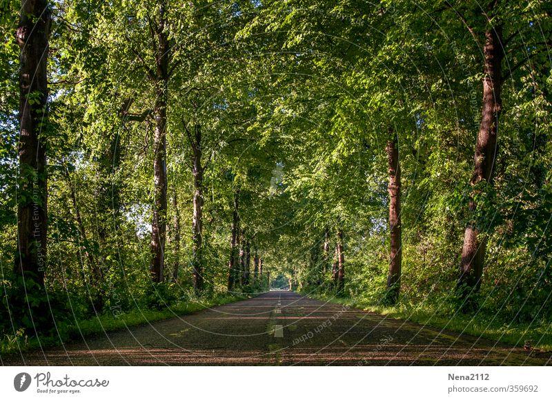 wegfahren... Ferien & Urlaub & Reisen grün Sommer Baum Landschaft Ferne Wald Straße Wege & Pfade Freizeit & Hobby Tourismus Ausflug Abenteuer Spaziergang Fahrradtour Baumstamm