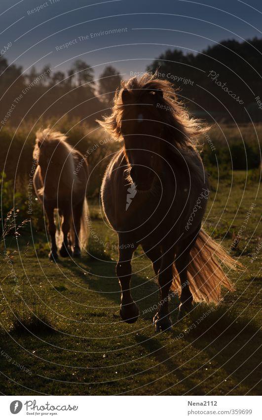 Earth, wind & sun Natur Frühling Sommer Herbst Schönes Wetter Wind Wiese Tier Haustier Nutztier Pferd Fell 2 Tierjunges Tierfamilie rennen Bewegung füttern