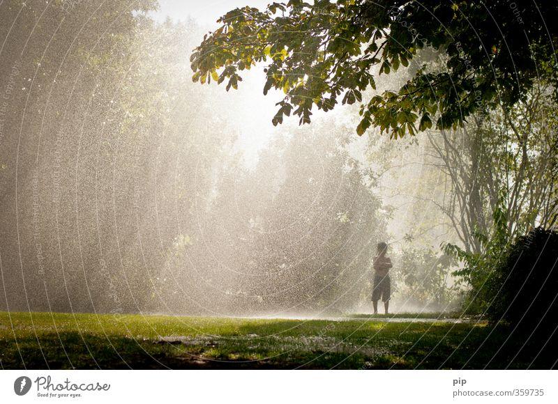 im regen stehngelassen Mensch Natur Sommer Sonne Baum Einsamkeit Landschaft Wald Wiese Wärme Gras Spielen Junge hell Regen Klima