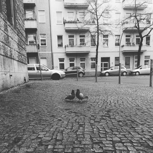 Zwei Tauben auf Kopfsteinpflaster Stadt Neukölln Berlin Straße Liebe Zuneigung