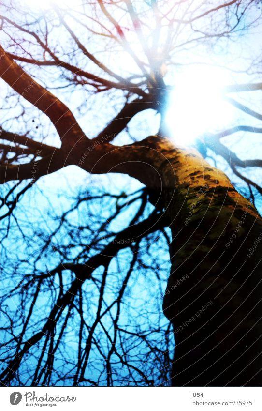Holz Natur Himmel Baum Ast obskur Baumstamm Doppelbelichtung