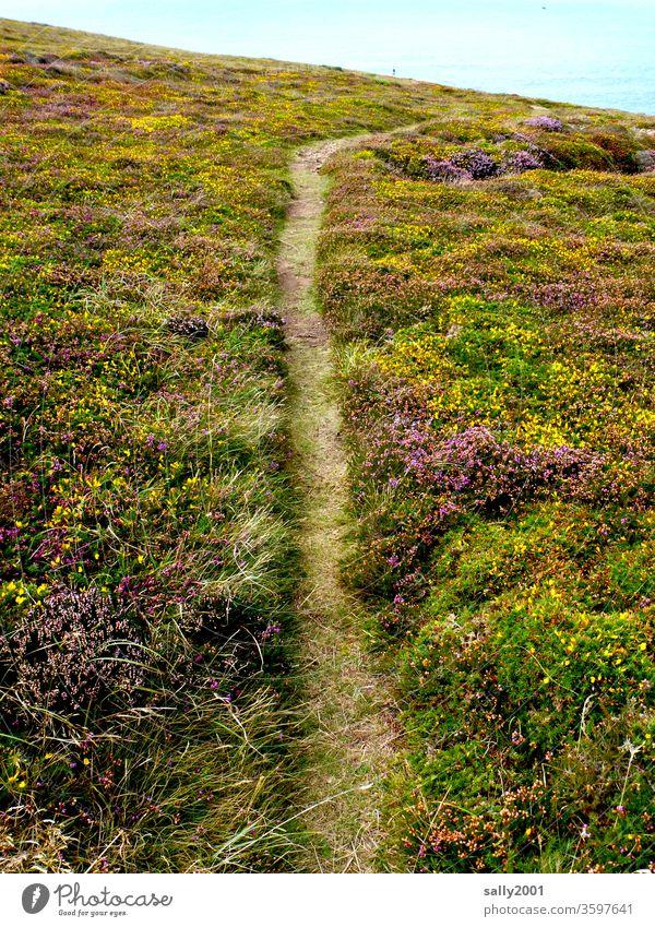 Trampelpfad... Weg Pfad Wege & Pfade Heide Heidekrautgewächse Erika Ginster Küste wandern Wanderweg Ruhe Einsamkeit Landschaft