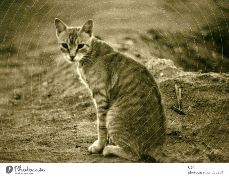 miezekatze #2 Ägypten Katze Ferien & Urlaub & Reisen Strand Tier Zufriedenheit Kurzhaar