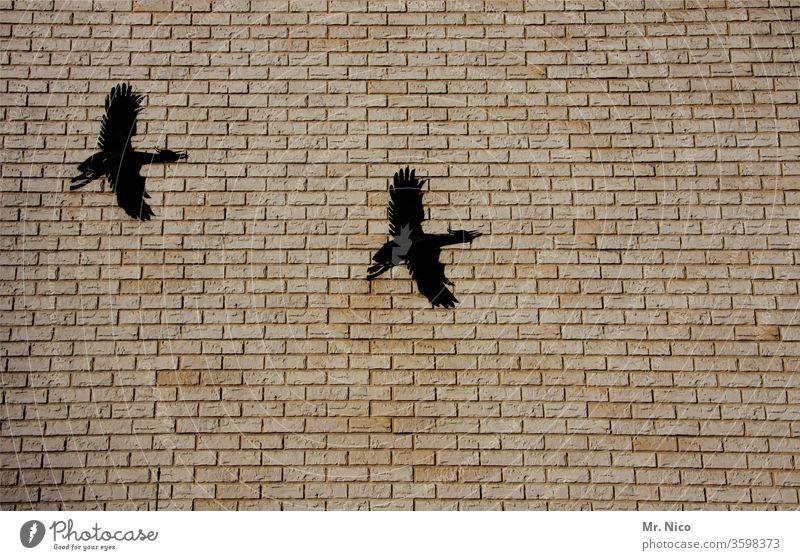 Kunst am Bau I Mauersegler Haus Zugvogel fliegen Bauwerk Tier Wand Vogel Gebäude Metallfigur Dekoration & Verzierung Abschreckung verschönern Kreativität