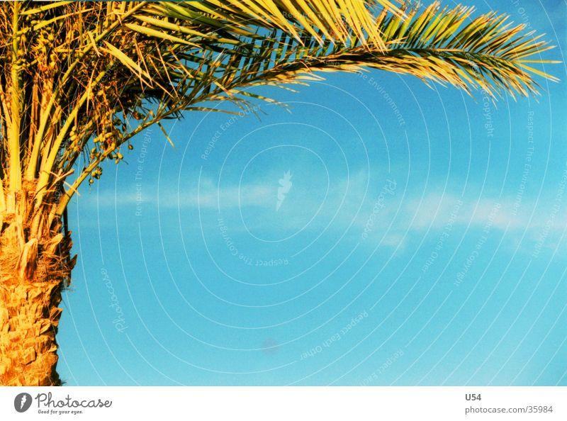 Sommer #2 Palme Strand Erholung Ferien & Urlaub & Reisen Physik Zufriedenheit Himmel Wasser Schatten Sonne Wärme