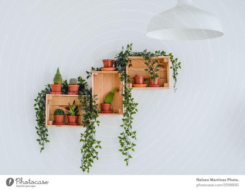 Weiße Wanddekoration mit Kaktus im Topf. Minimales Liebhaber-Konzept. Dekoration & Verzierung grün Kakteen Botanik Pflanze frisch Natur Zimmerpflanze botanisch