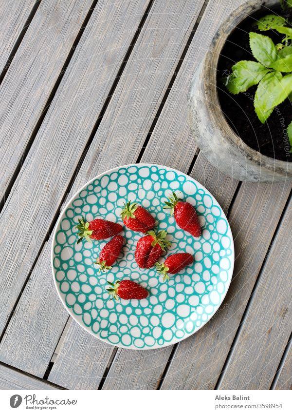 Erdbeeren Garten Gartenpflanzen Farbfoto Frucht rot lecker süß Sommer Außenaufnahme frisch Lebensmittel Bioprodukte Ernährung Gesundheit Vitamin natürlich