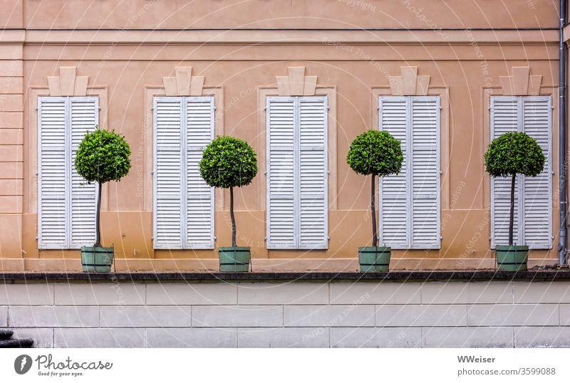 Seitenansicht Schloss Rheinsberg mit dekorativen Bäumchen Schlosspark Lustgarten Kübel Pflanzen Zierbäume Fenster geschlossen Fensterläden minimalistisch Reihe