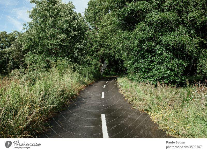 Straße durch den Wald horizontal Farbe Farbfoto Außenaufnahme Natur Tag natürlich Ferien & Urlaub & Reisen Berge u. Gebirge Landschaft Menschenleer Umwelt