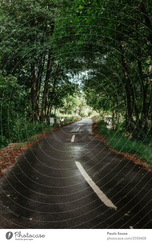Straße durch den Wald Verkehrswege Außenaufnahme Menschenleer Asphalt Wege & Pfade Straßenbelag Verkehrsschild Tag Linie Farbfoto Straßenverkehr Straßenkreuzung