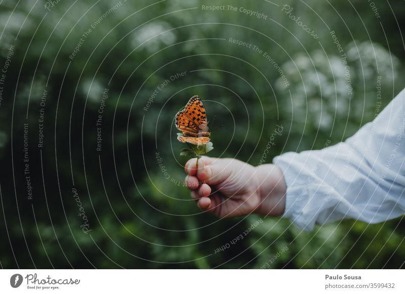 Kinderhand hält Schmetterling Hand Schmetterlinge Insekt Natur Umwelt Umweltschutz Tier Außenaufnahme Nahaufnahme Farbfoto Tag grün weiß schön mehrfarbig