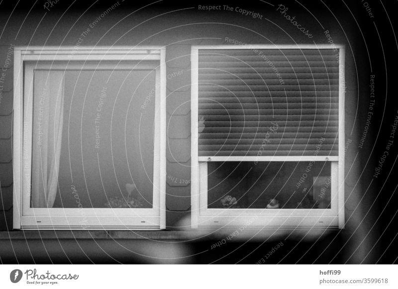 trübe Aussichten - Dachfenster schlechtes Wetter Urbanisierung grau Depression depressiv Tristesse trostlos Einsamkeit trist Winter kalt Umwelt Gedeckte Farben